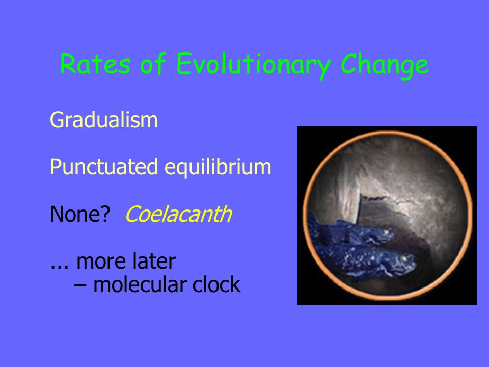 Rates of Evolutionary Change