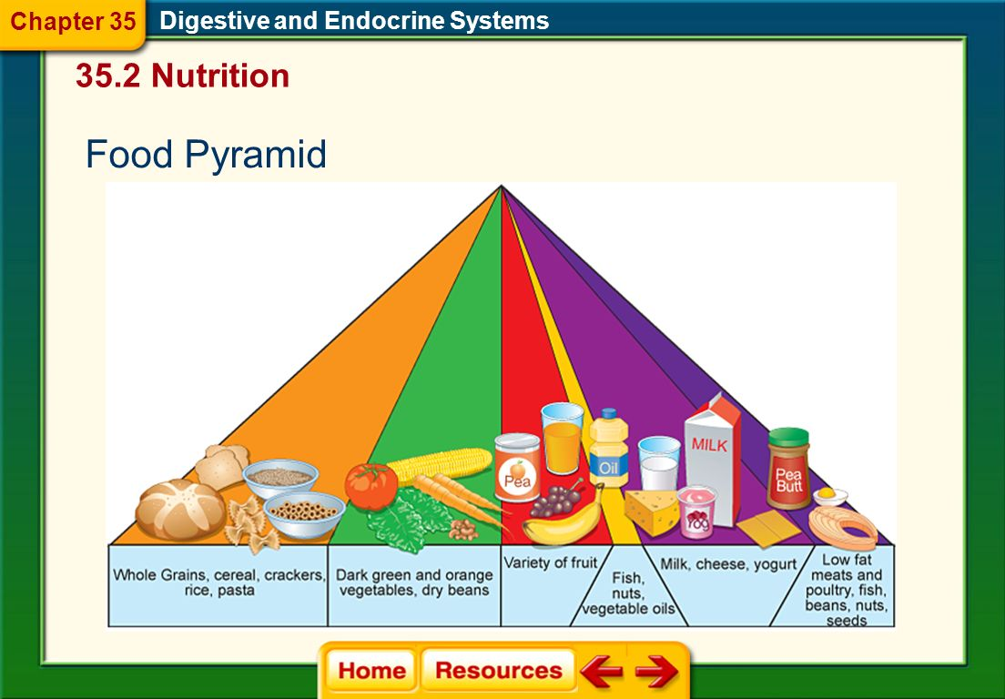 Chapter 35 Digestive and Endocrine Systems 35.2 Nutrition Food Pyramid