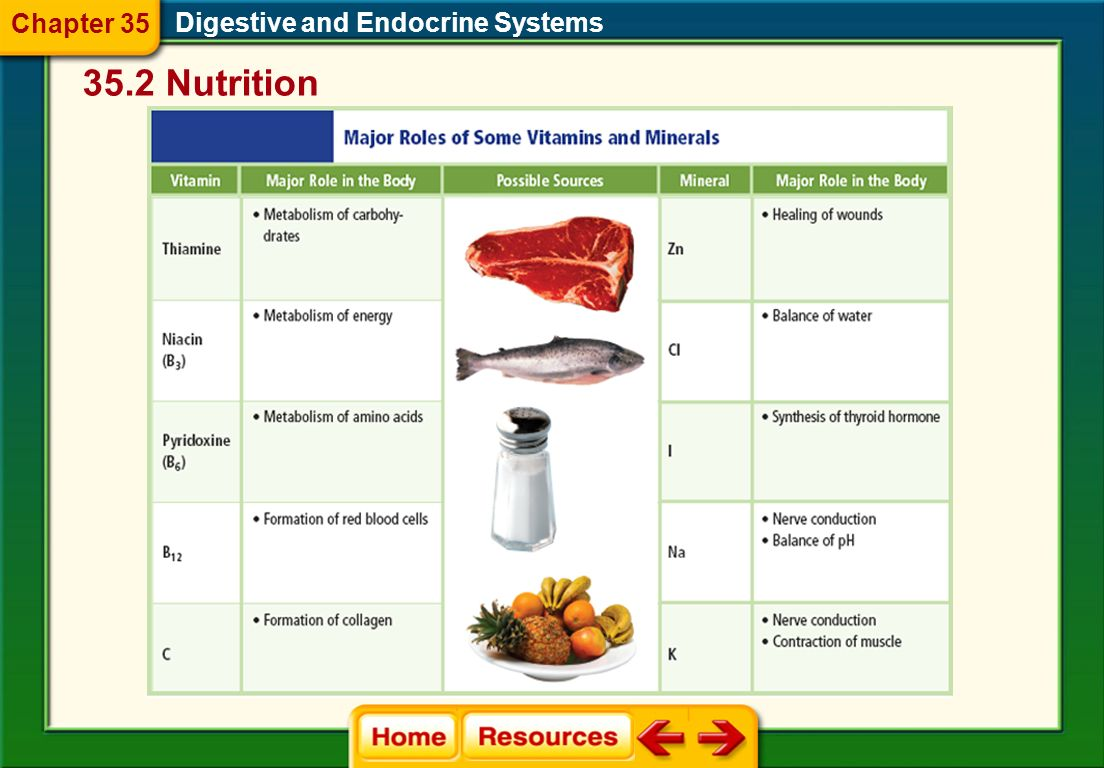 Chapter 35 Digestive and Endocrine Systems 35.2 Nutrition