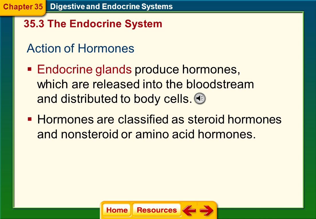 endocrine systems the actions of hormones on target cells The human endocrine system the many processes regulated by the actions of hormones hormones can only affect target cells that have the appropriate receptors this property of hormones is known as specificity.