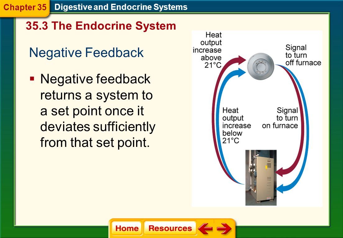 Chapter 35 Digestive and Endocrine Systems. 35.3 The Endocrine System. Negative Feedback.