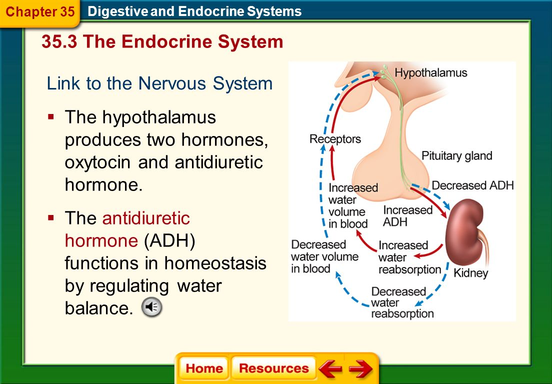 Link to the Nervous System