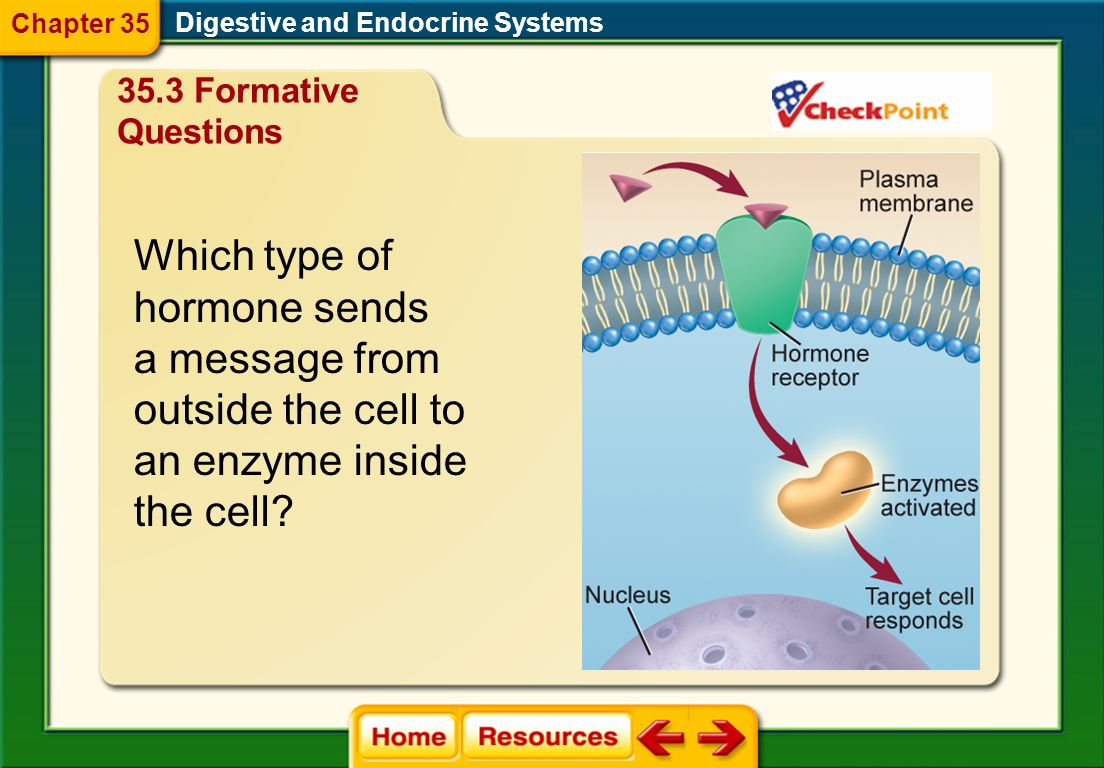 Which type of hormone sends a message from outside the cell to