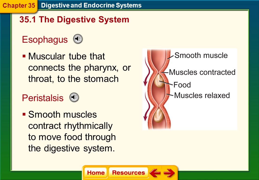 Muscular tube that connects the pharynx, or throat, to the stomach