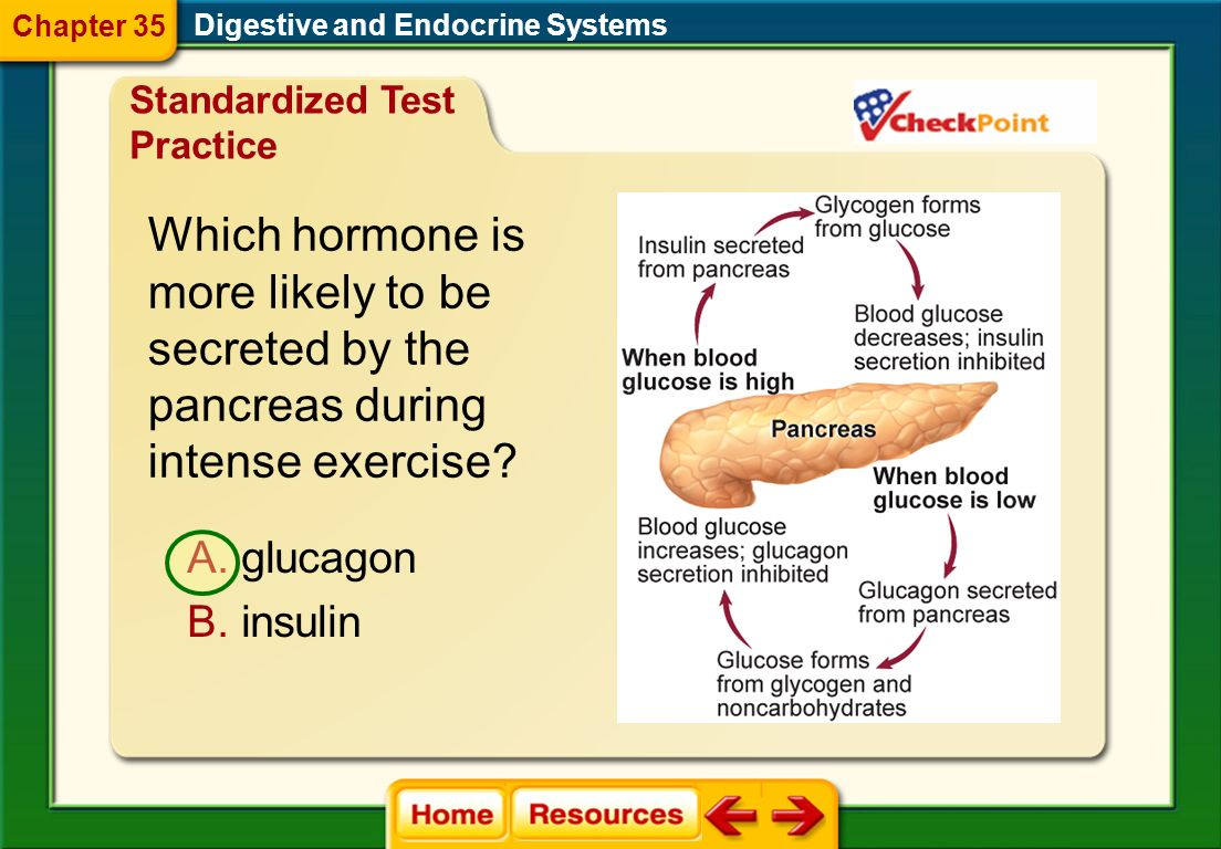 Which hormone is more likely to be secreted by the pancreas during