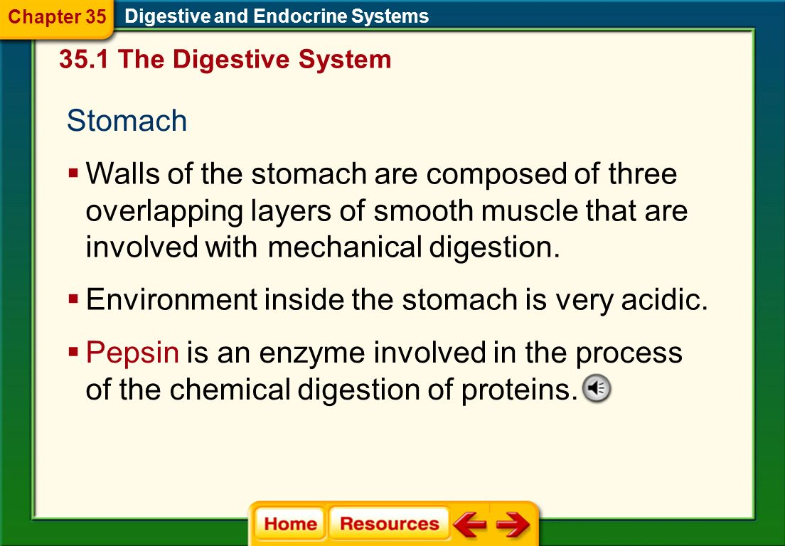 Environment inside the stomach is very acidic.