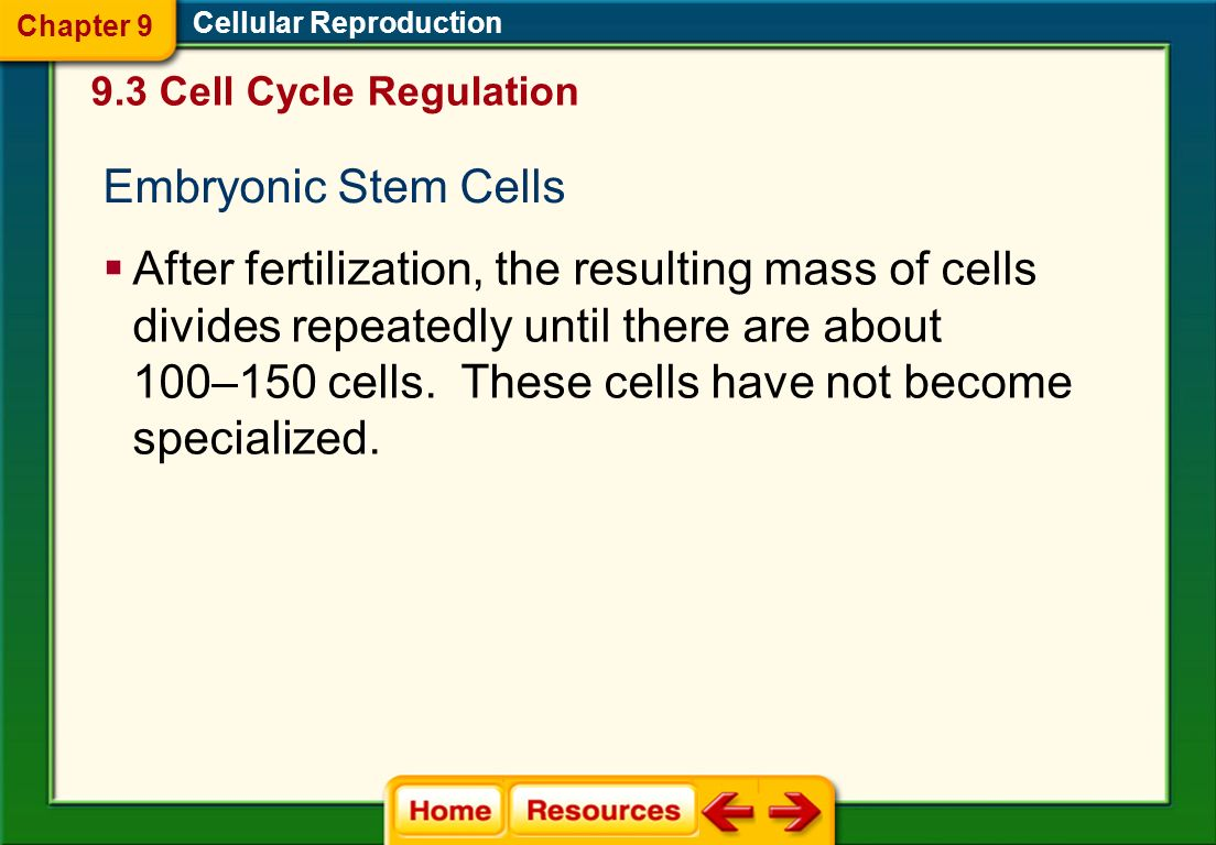 Chapter 9 Cellular Reproduction. 9.3 Cell Cycle Regulation. Embryonic Stem Cells.
