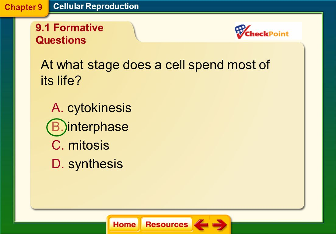 At what stage does a cell spend most of its life