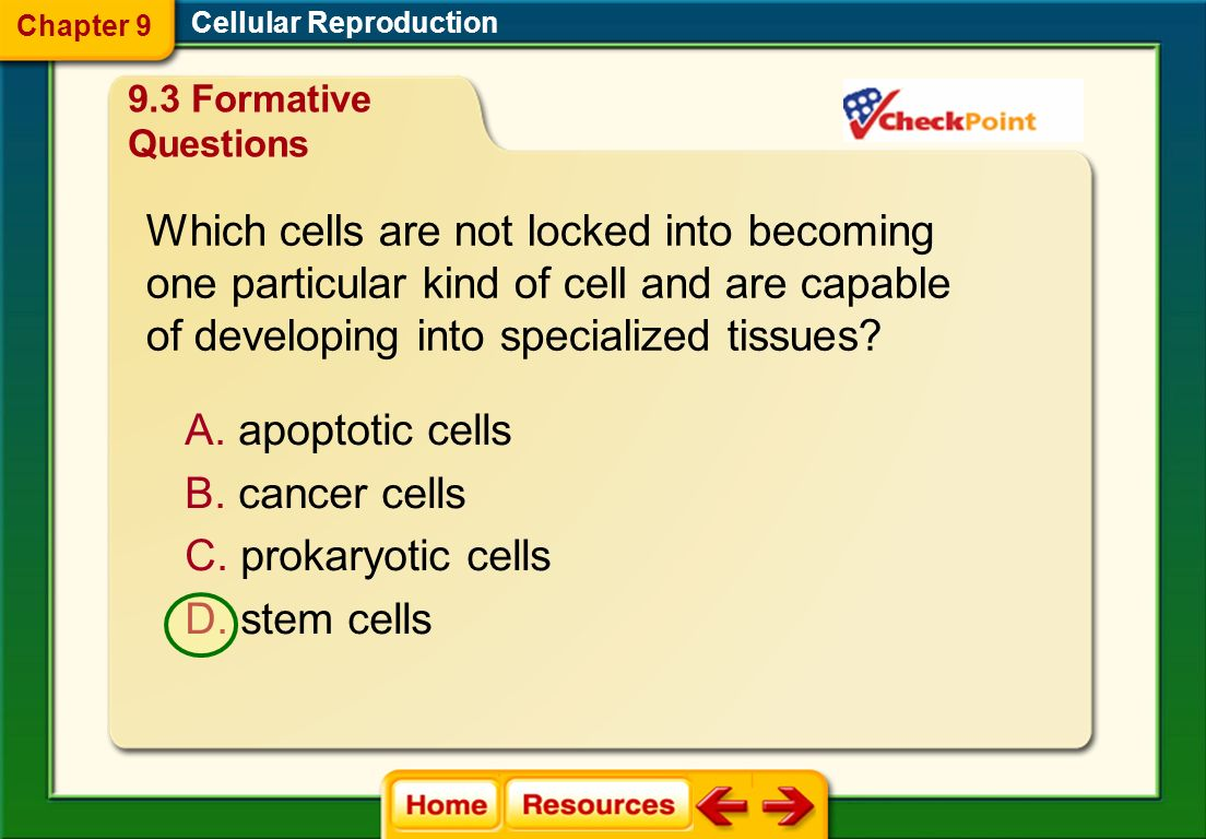 Which cells are not locked into becoming