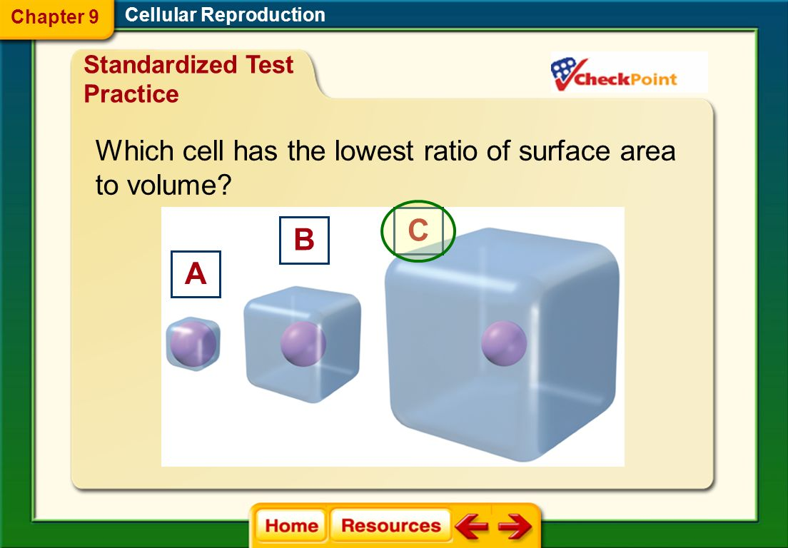 C B A Which cell has the lowest ratio of surface area to volume