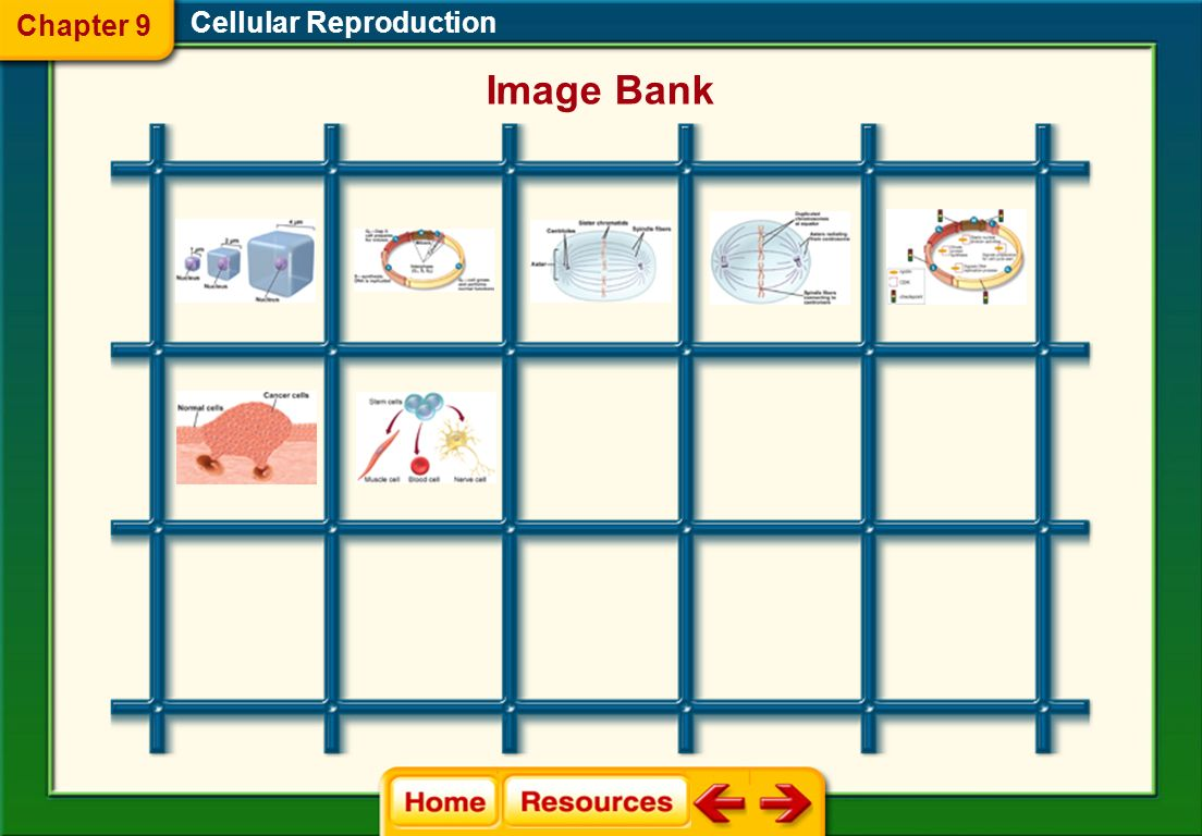 Chapter 9 Cellular Reproduction Image Bank