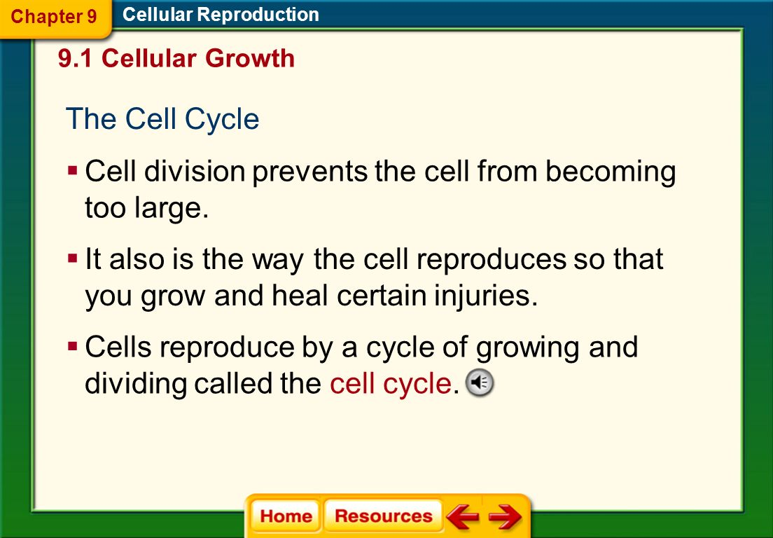 Cell division prevents the cell from becoming too large.
