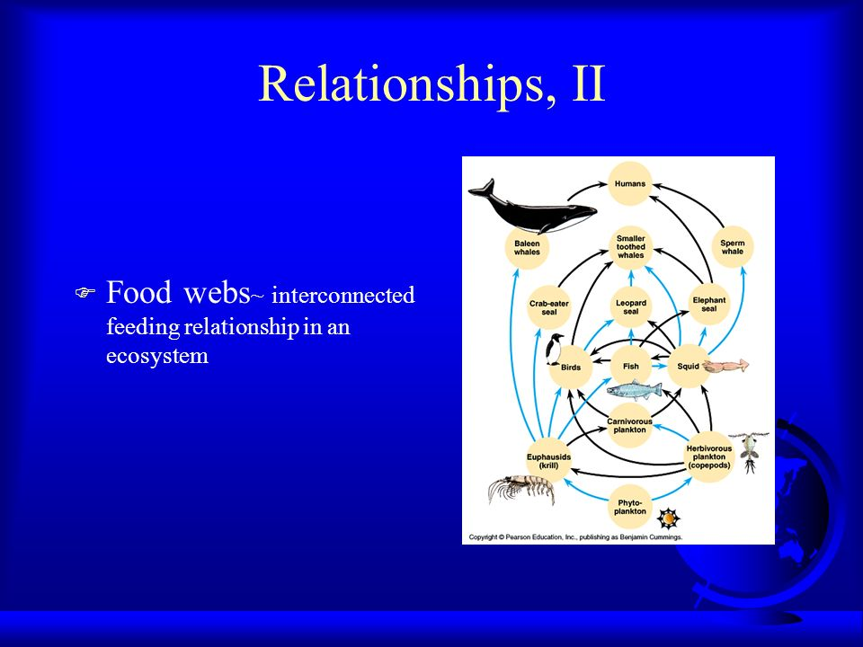Relationships, II Food webs~ interconnected feeding relationship in an ecosystem