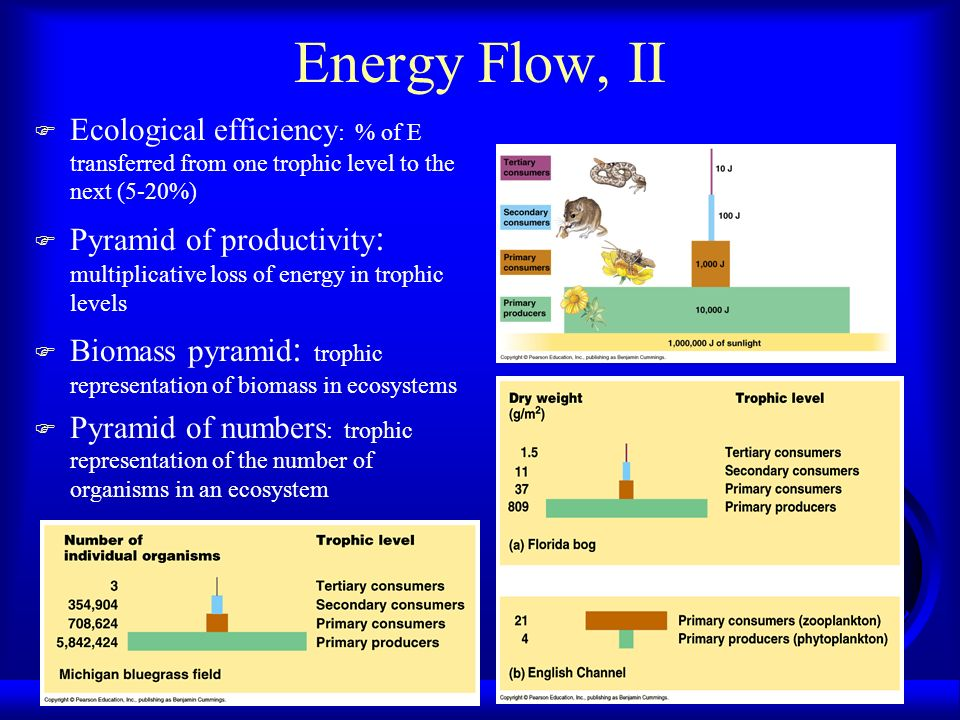 Energy Flow, II Ecological efficiency: % of E transferred from one trophic level to the next (5-20%)