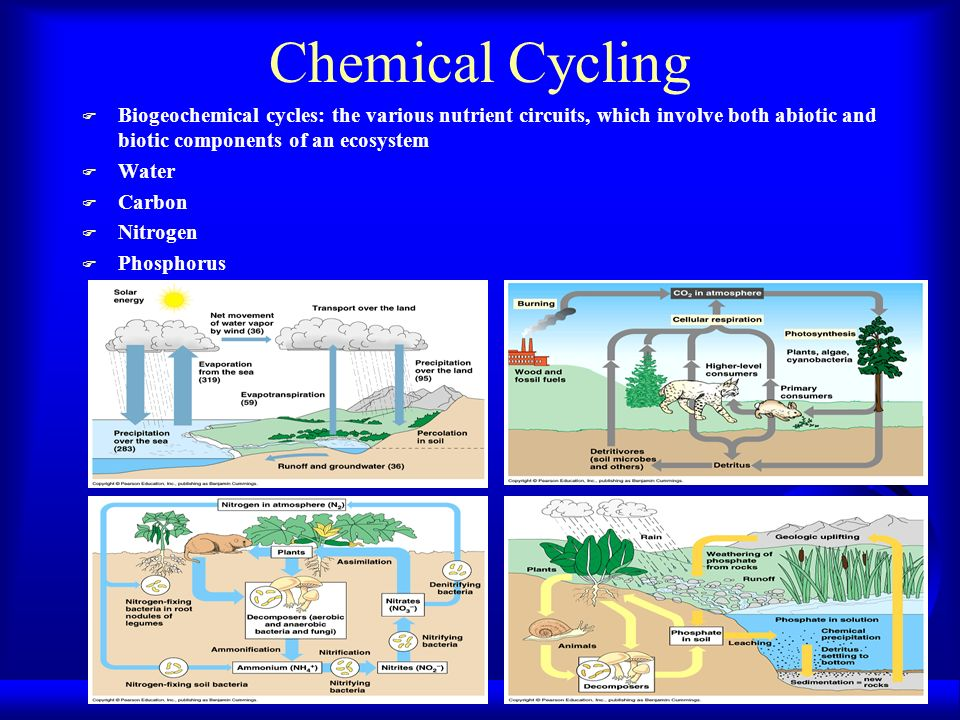 Chemical Cycling Biogeochemical cycles: the various nutrient circuits, which involve both abiotic and biotic components of an ecosystem.