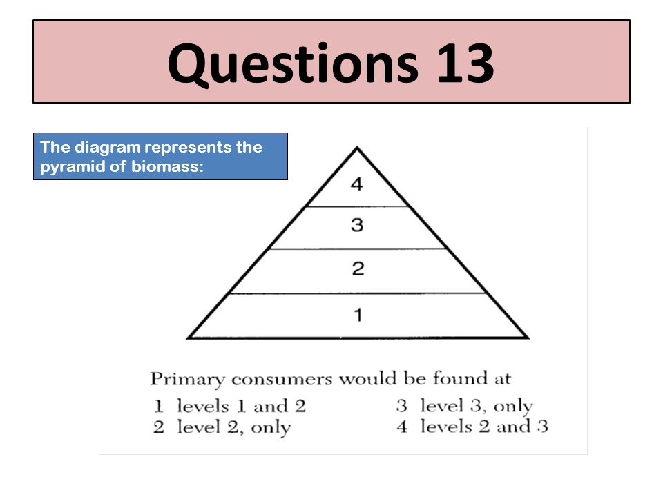 Questions 13 The diagram represents the pyramid of biomass: