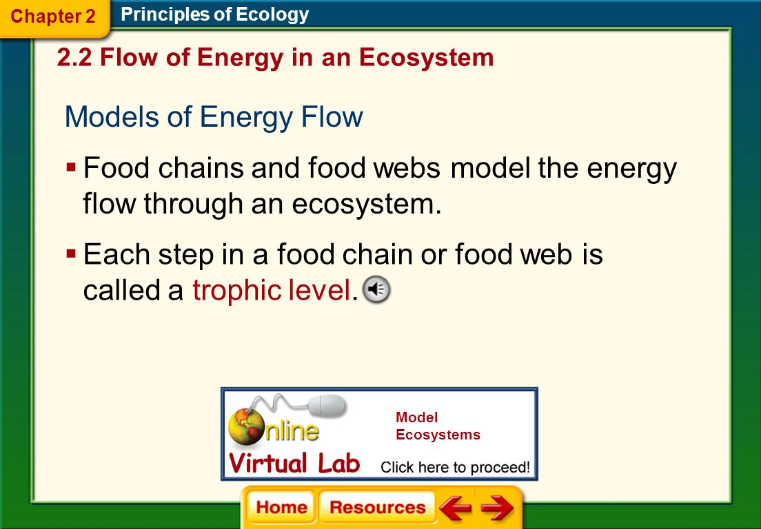 Food chains and food webs model the energy flow through an ecosystem.