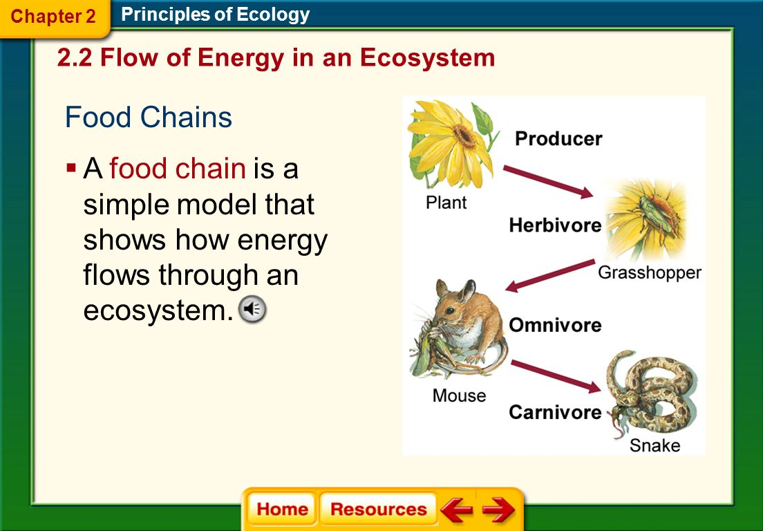 Chapter 2 Principles of Ecology. 2.2 Flow of Energy in an Ecosystem. Food Chains.