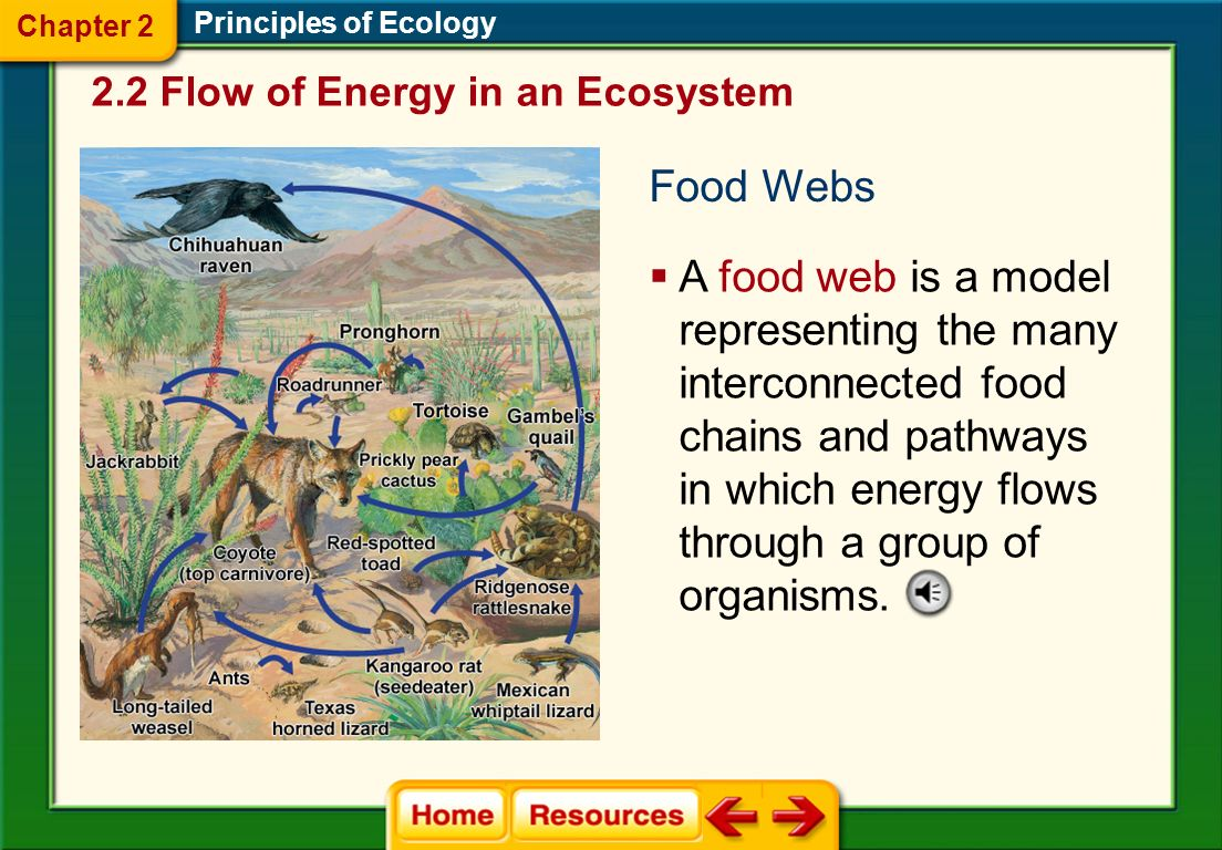 Chapter 2 Principles of Ecology. 2.2 Flow of Energy in an Ecosystem. Food Webs.
