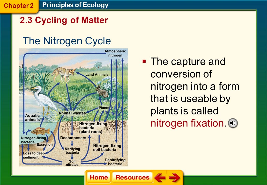 Chapter 2 Principles of Ecology. 2.3 Cycling of Matter. The Nitrogen Cycle.