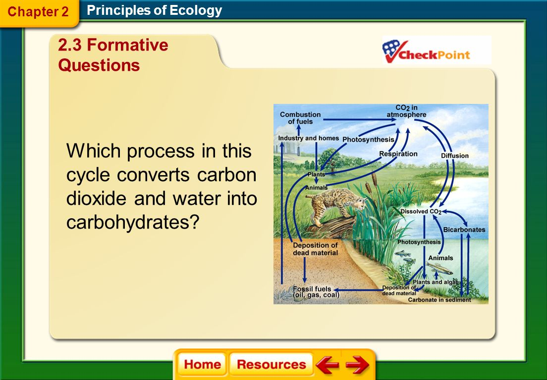 Which process in this cycle converts carbon dioxide and water into