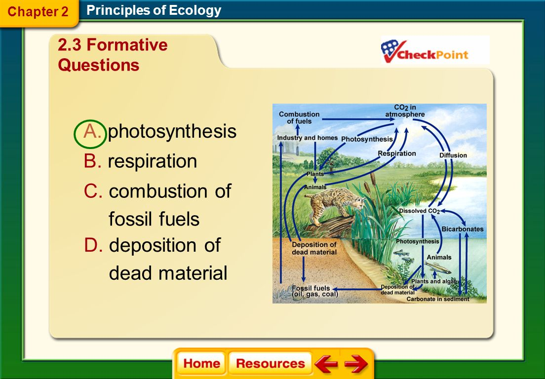 photosynthesis respiration combustion of fossil fuels deposition of