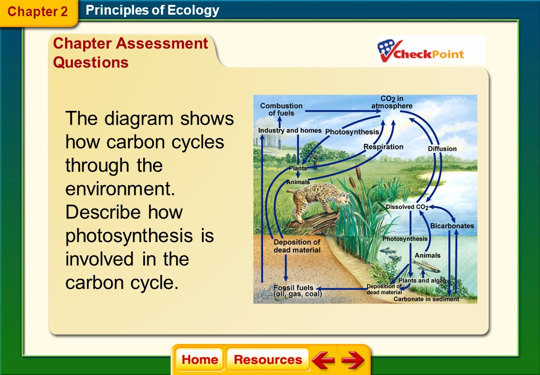 The diagram shows how carbon cycles through the environment.