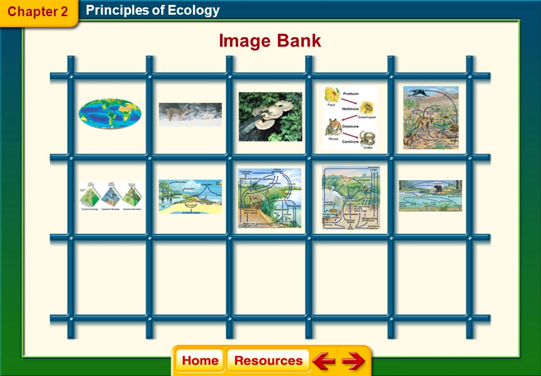 Chapter 2 Principles of Ecology Image Bank