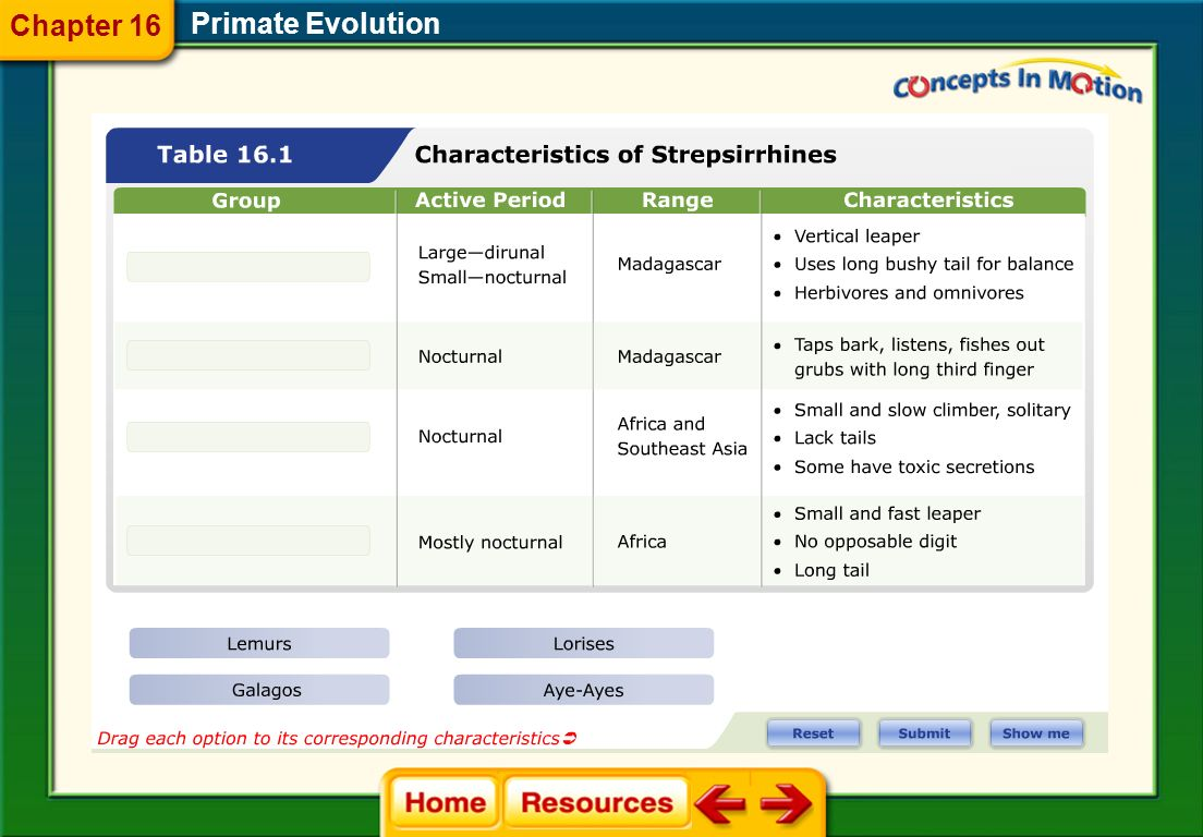 Chapter 16 Primate Evolution