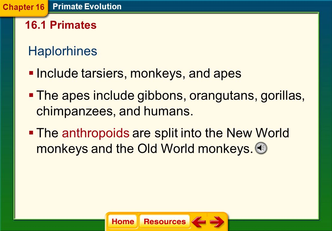 Include tarsiers, monkeys, and apes