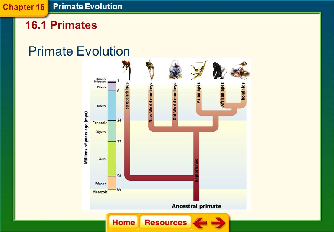 Chapter 16 Primate Evolution 16.1 Primates Primate Evolution