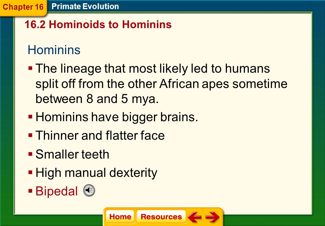 Hominins have bigger brains. Thinner and flatter face