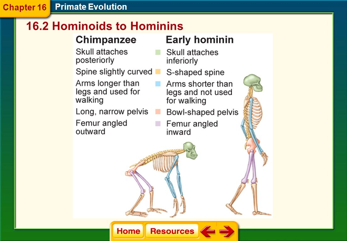 Chapter 16 Primate Evolution 16.2 Hominoids to Hominins