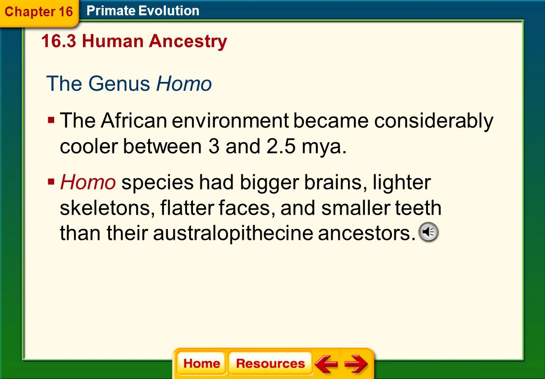 Chapter 16 Primate Evolution. 16.3 Human Ancestry. The Genus Homo. The African environment became considerably cooler between 3 and 2.5 mya.