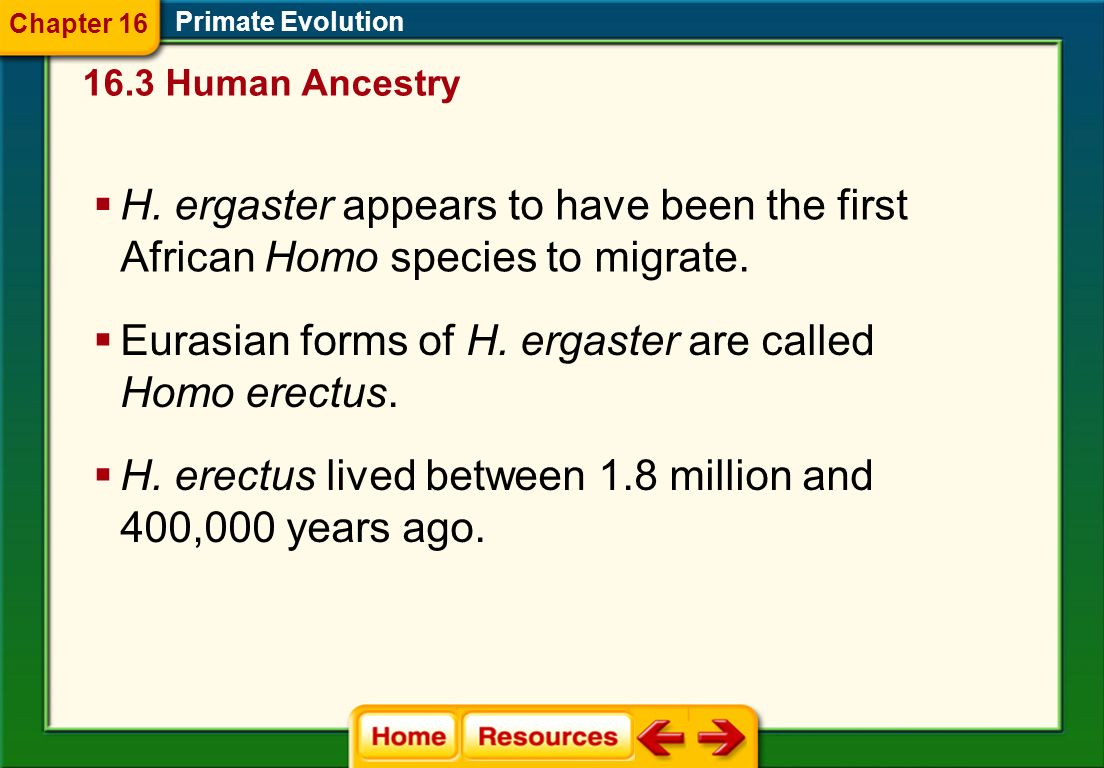 Eurasian forms of H. ergaster are called Homo erectus.