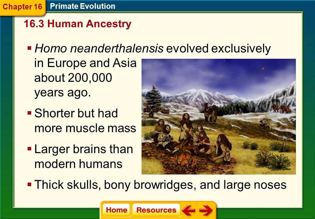 Homo neanderthalensis evolved exclusively in Europe and Asia
