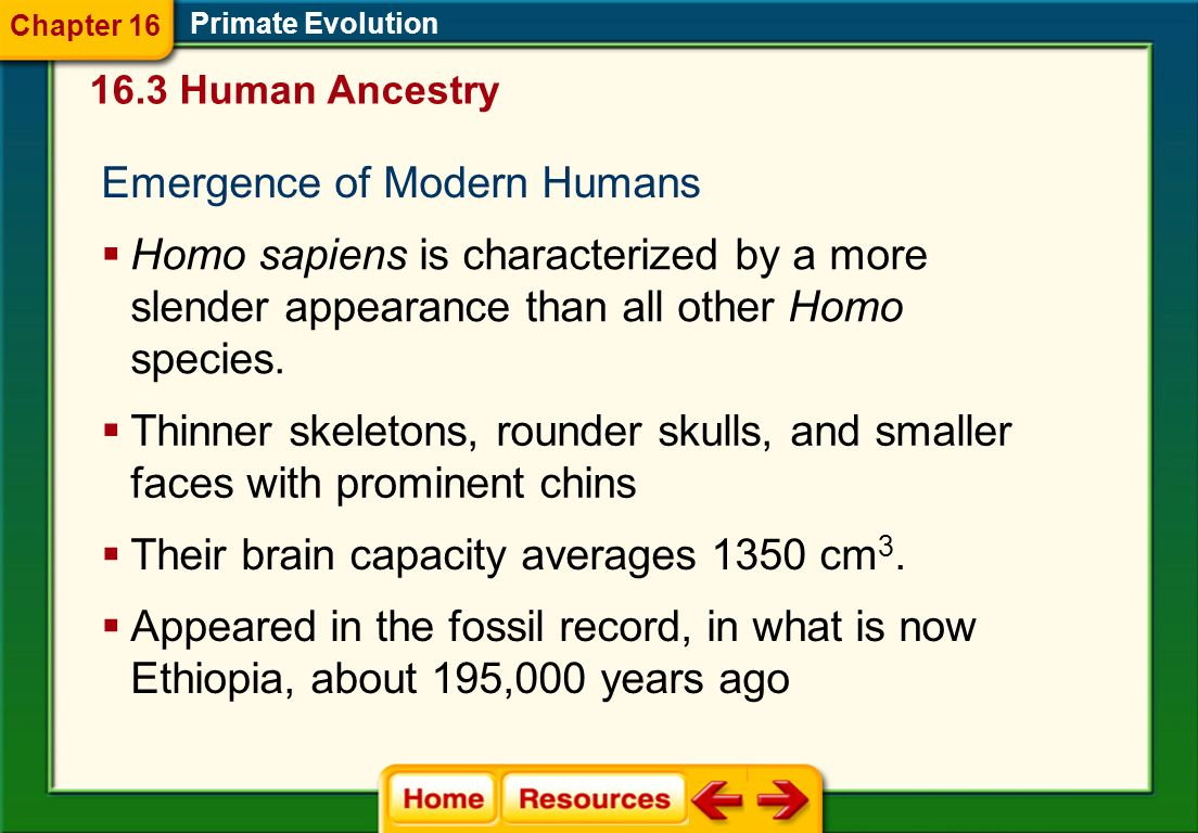 Emergence of Modern Humans