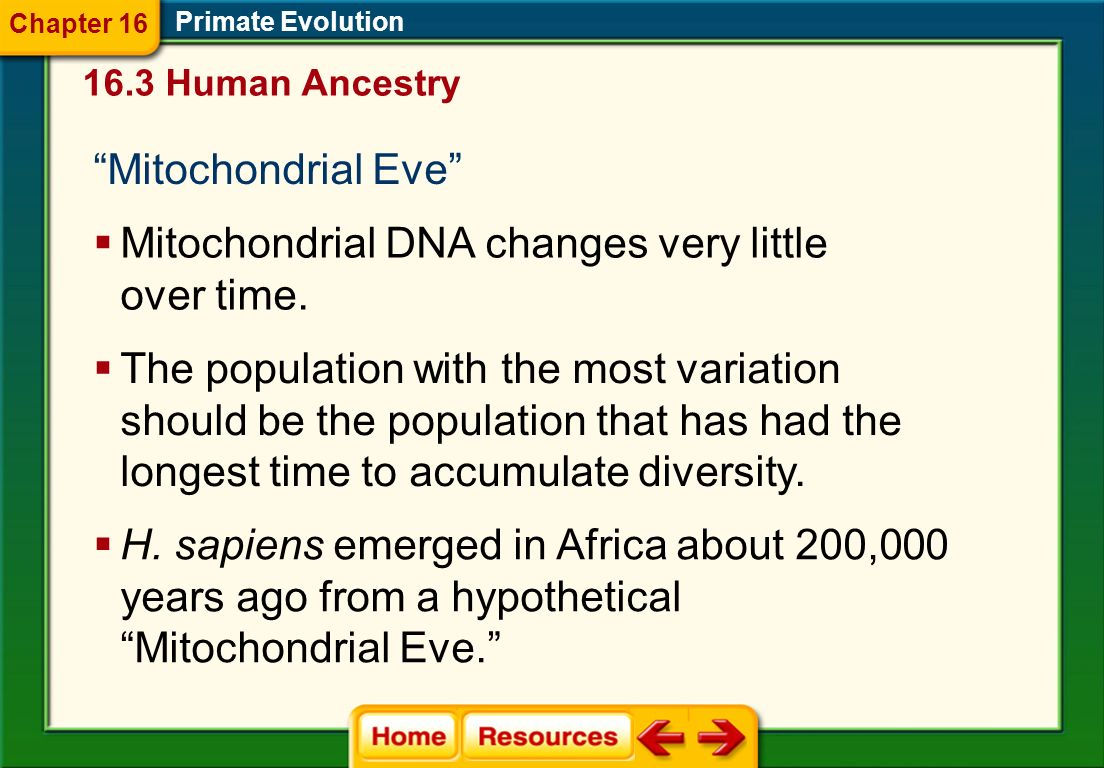 Mitochondrial DNA changes very little over time.