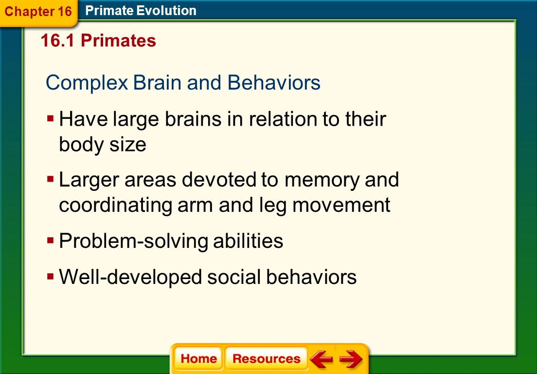 Complex Brain and Behaviors