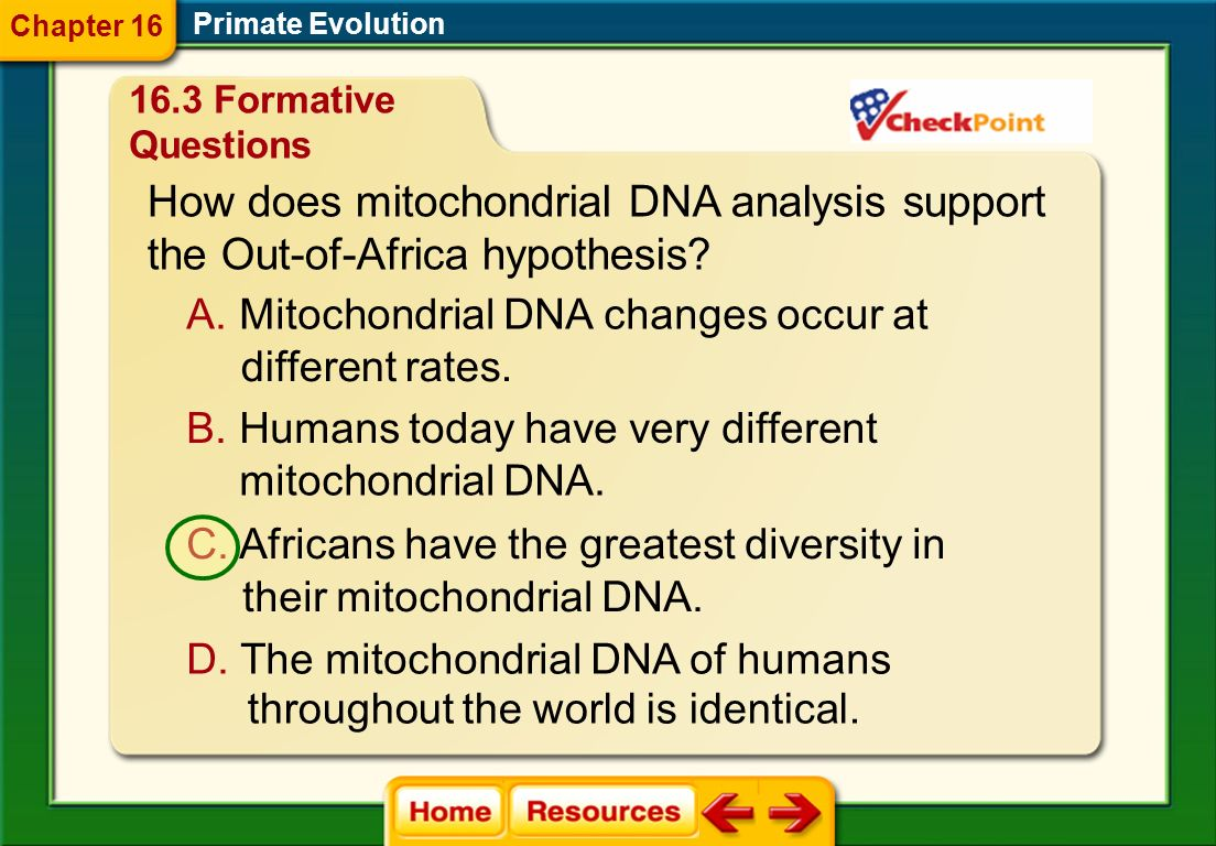 How does mitochondrial DNA analysis support