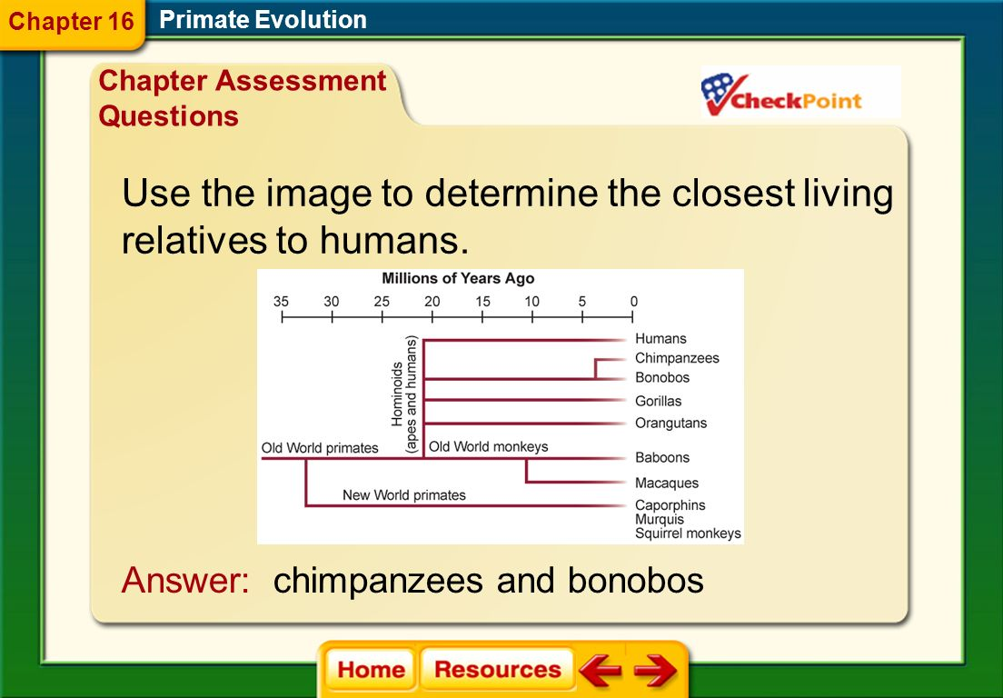 Use the image to determine the closest living relatives to humans.