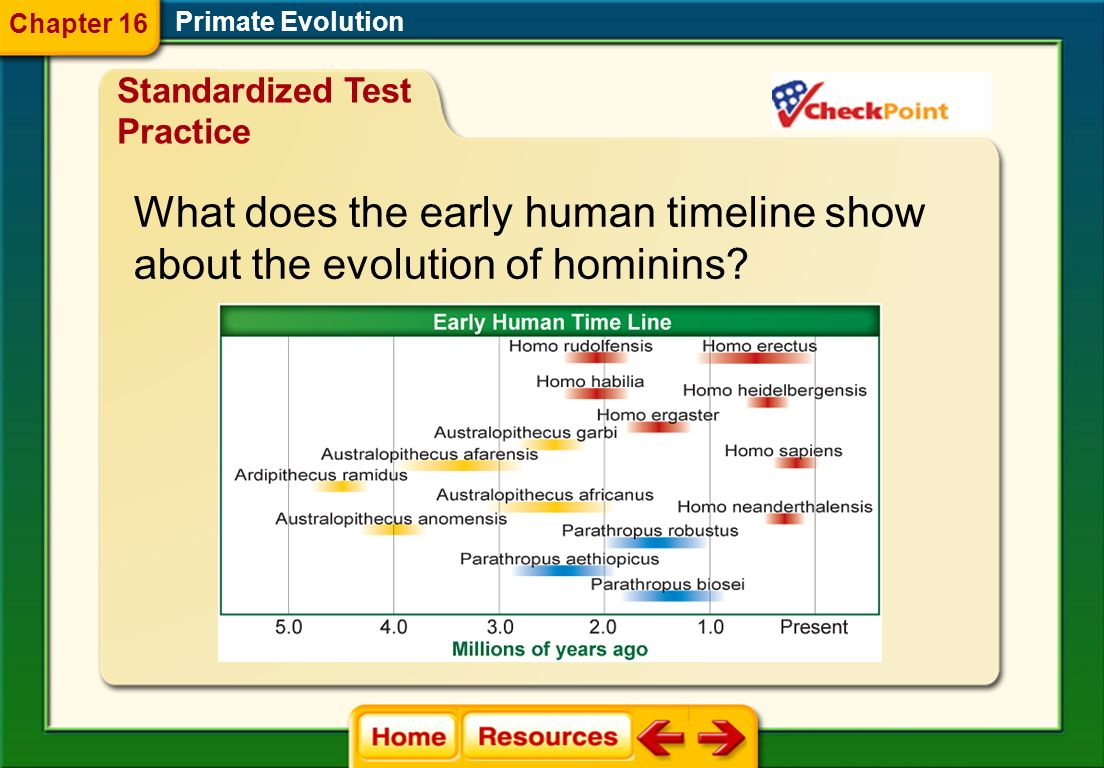 What does the early human timeline show