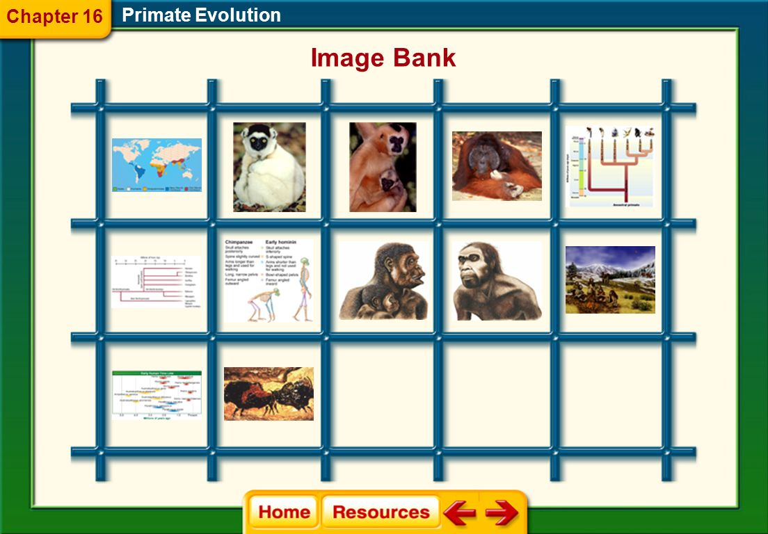Chapter 16 Primate Evolution Image Bank