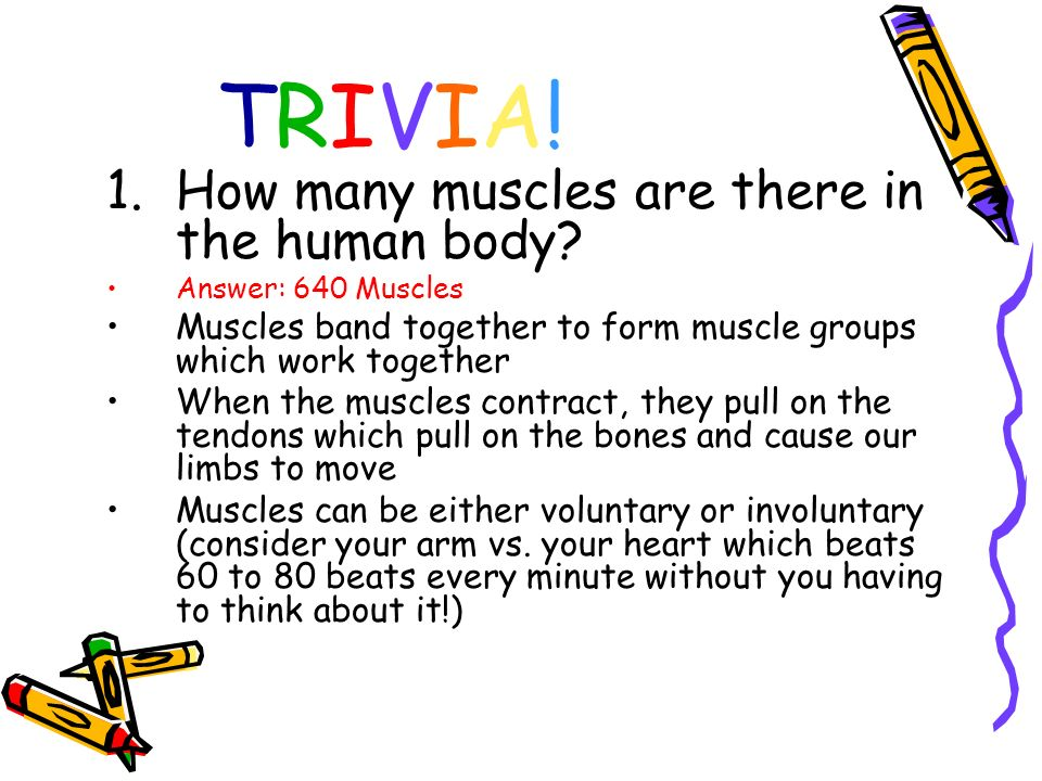 TRIVIA! How many muscles are there in the human body