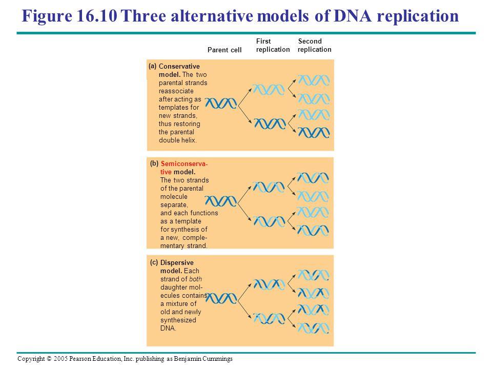 Figure 16.10 Three alternative models of DNA replication