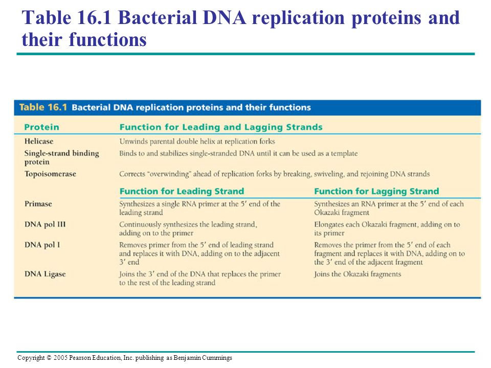 Table 16.1 Bacterial DNA replication proteins and their functions