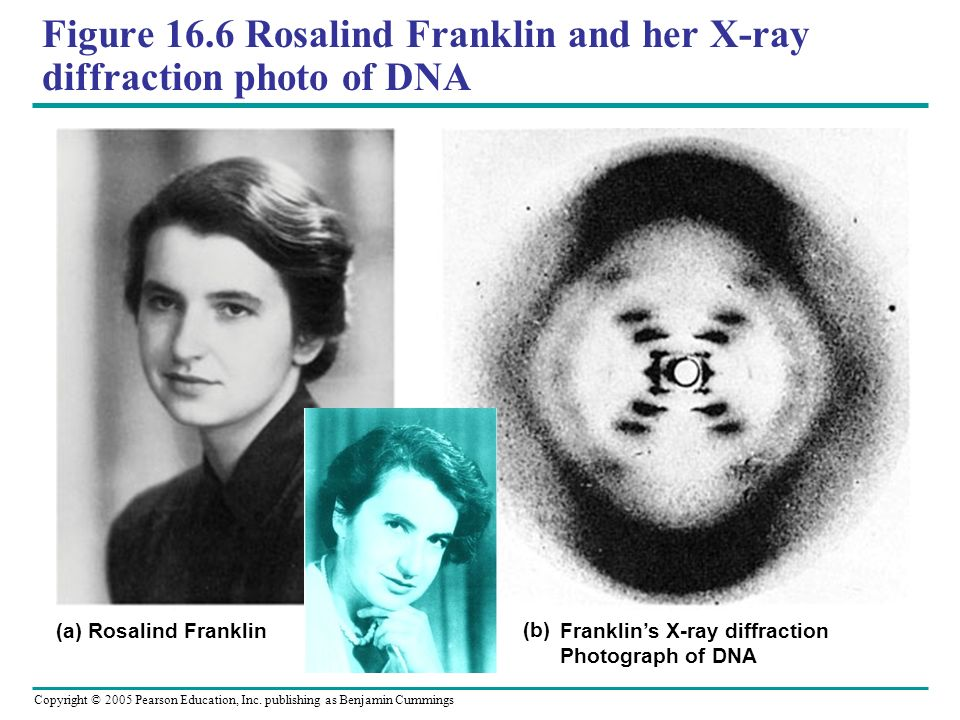 Figure 16.6 Rosalind Franklin and her X-ray diffraction photo of DNA