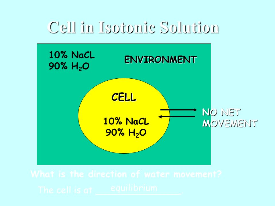 Cell in Isotonic Solution
