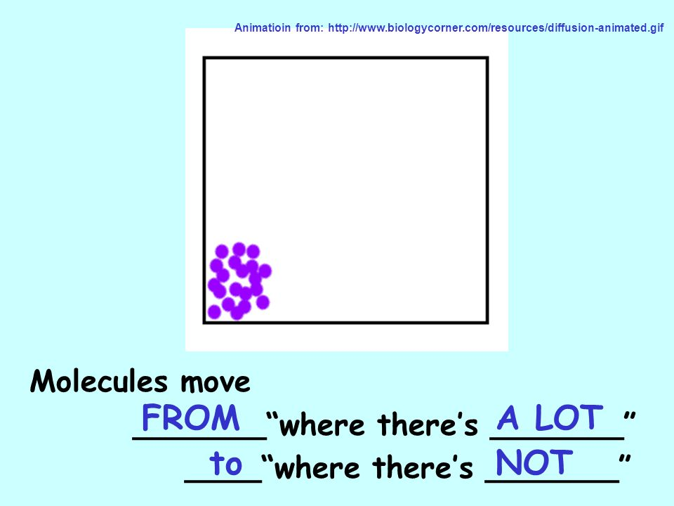 FROM A LOT to NOT Molecules move _______ where there's _______