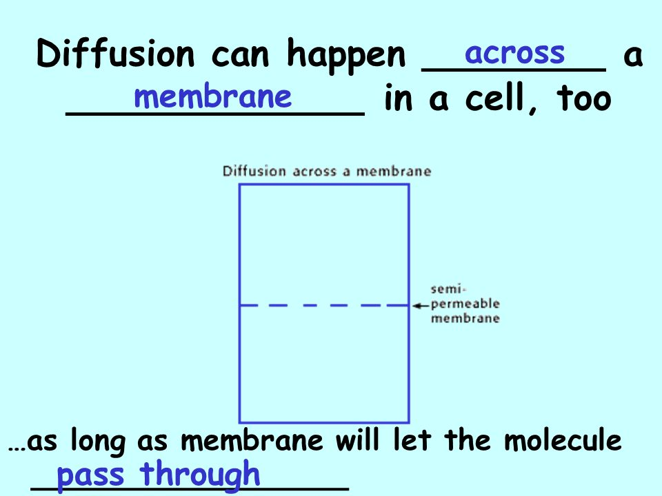 Diffusion can happen ________ a _____________ in a cell, too